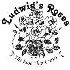 Ludwig's Roses 48th Spring Rose Festival